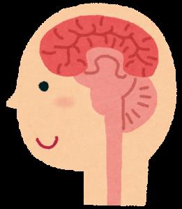 脳から前頭葉まで